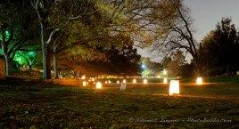LuminariFest 8